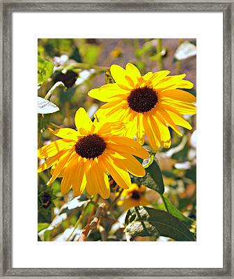080 Framed Print by Marty Koch