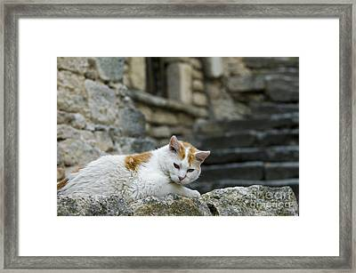 080720p005 Framed Print by Arterra Picture Library