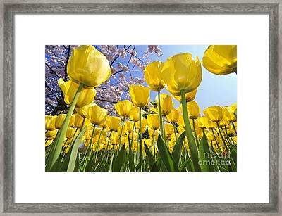 090416p030 Framed Print