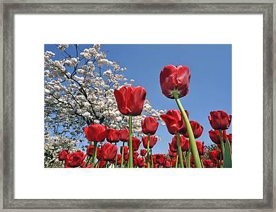 090416p031 Framed Print