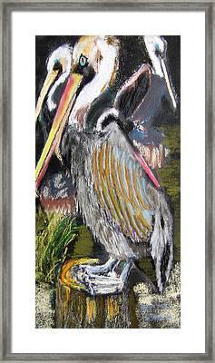 090914 Pelicans Framed Print