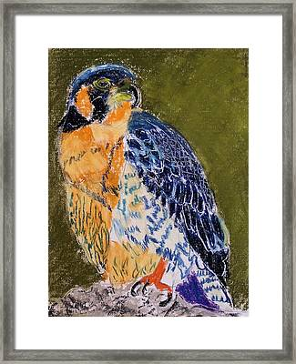 092914 Paragon Falcon Framed Print