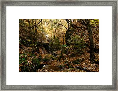 Forest Framed Print by Odon Czintos