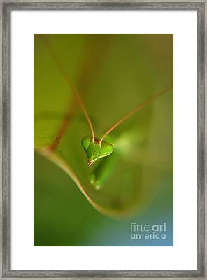 Praying Manta Framed Print by Michelle Meenawong