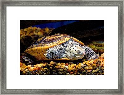 Sea Turtle Framed Print by Savannah Gibbs