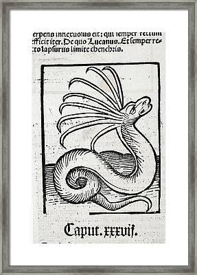 1491 Cerastes Lure Snake Hortus Sanitatis Framed Print by Paul D Stewart