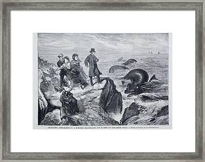 1871 Kilkee Irish Sea Monster Serpent Framed Print by Paul D Stewart