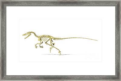 3d Rendering Of A Velociraptor Dinosaur Framed Print by Leonello Calvetti