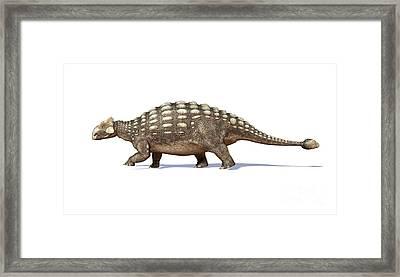 3d Rendering Of An Ankylosaurus Framed Print