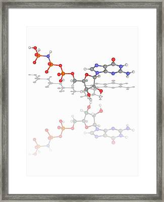 5'-guanylyl Imidodiphosphate Molecule Framed Print by Laguna Design/science Photo Library