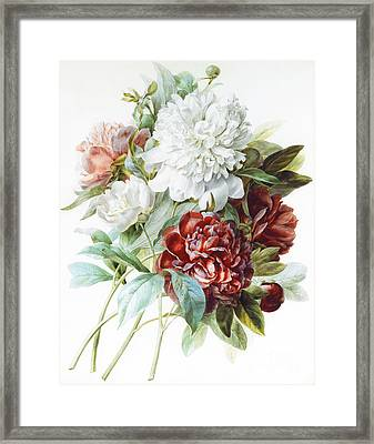 A Bouquet Of Red Pink And White Peonies Framed Print