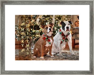 A Bubba And Kensie Christmas Framed Print by Shelley Neff