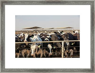 A Dairy Farm In California Framed Print by Ashley Cooper