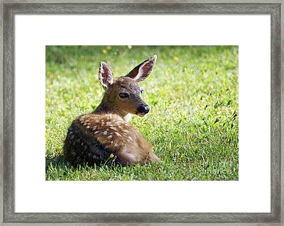 A Fawn On The Lawn Framed Print