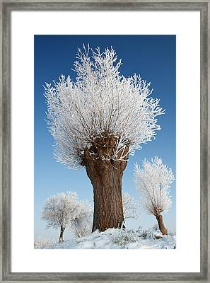 A Frosted Willow On A Very Cold And Bright Winter Day Framed Print by Roeselien Raimond