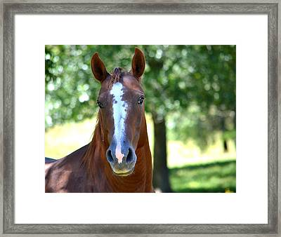 A Horse Is A Horse Framed Print