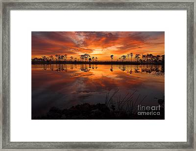A New Day Dawning Framed Print by Jane Axman