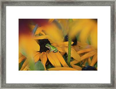 A Pacific Treefrog Looks For Flies Framed Print