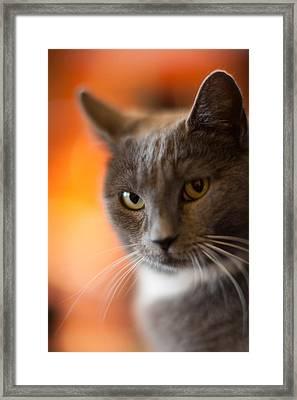 A Peek Framed Print by Mike Reid