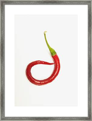 A Red Jalapeno Pepper That Has Curled Framed Print by John Short