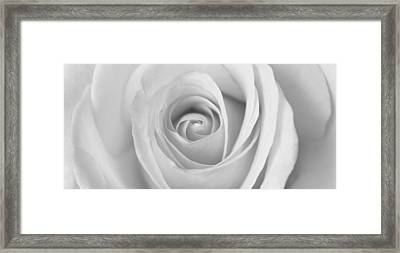 Framed Print featuring the photograph A Rose Is A Rose Is... by Silke Brubaker
