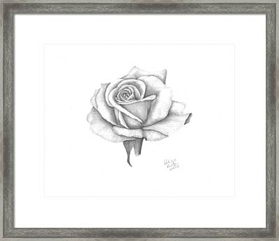 A Roses Beauty Framed Print