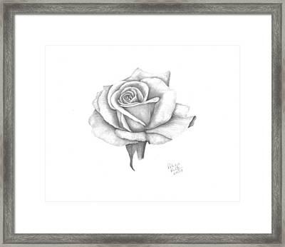 A Roses Beauty Framed Print by Patricia Hiltz