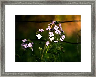 A Secret Place Framed Print by Steve Harrington