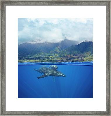 A Split Image Of A Pair Of Humpback Framed Print