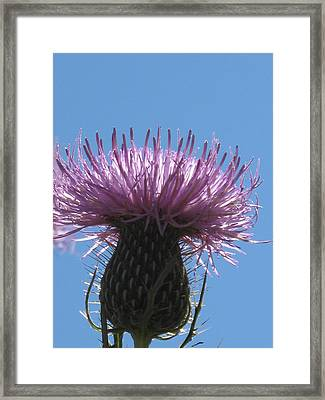 A Thistle At Noon Framed Print