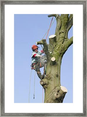 A Tree Surgeon Chopping A Tree Down Framed Print