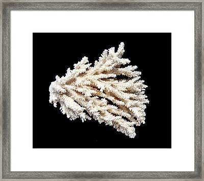 Acropora Paniculata Framed Print by Natural History Museum, London