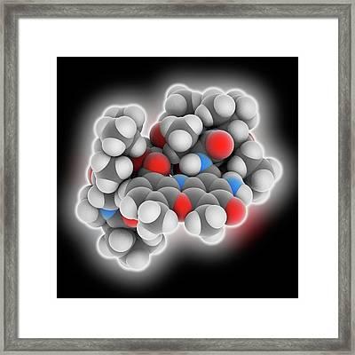 Actinomycin D Drug Molecule Framed Print