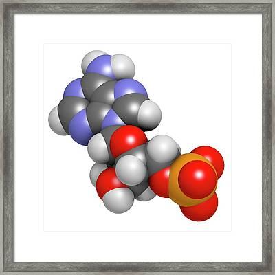Adenosine Monophosphate Molecule Framed Print