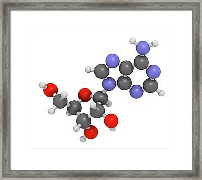 Adenosine Purine Nucleoside Molecule Framed Print by Molekuul