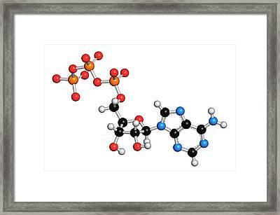 Adenosine Triphosphate Molecule Framed Print by Molekuul