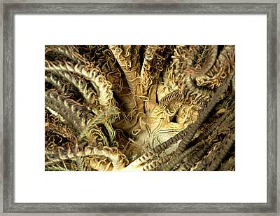 Aequorea Pensilis Framed Print by Natural History Museum, London
