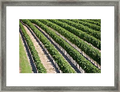 Framed Print featuring the photograph Aerial View Of Vineyard In Ontario Canada by Marek Poplawski