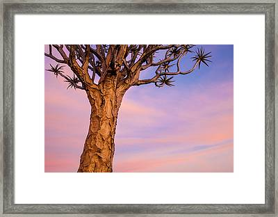 Africa, Namibia Close-up Of Quiver Tree Framed Print