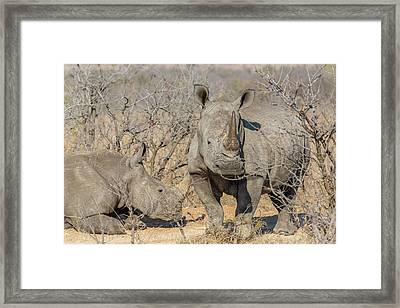 Africa, South Africa, Ngala Private Framed Print by Jaynes Gallery