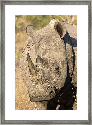 Africa, South Africa, Sabi Sabi Private Framed Print by Jaynes Gallery