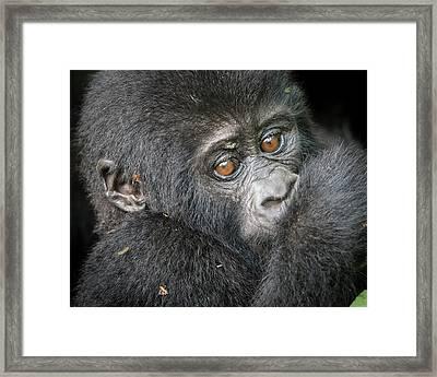 Africa, Uganda, Bwindi Impenetrable Framed Print