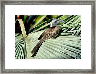 African Grey Hornbill Framed Print by George Atsametakis