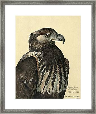 African Sea Eagle Framed Print by Rob Dreyer