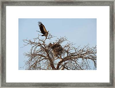 African Series Birds Framed Print by Katherine Green