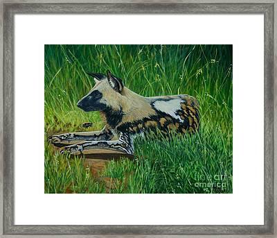 African Wild Dog Framed Print by Caroline Street