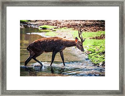 After Bathing. Mauritius Framed Print