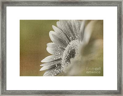 After The Rain Framed Print by Eden Baed