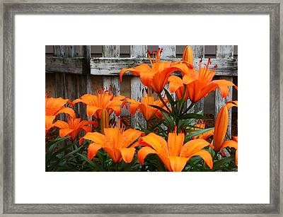 Afternoon Delight Framed Print by Bruce Bley