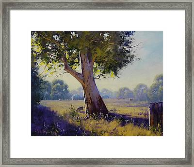 Afternoon Light Grazing Framed Print